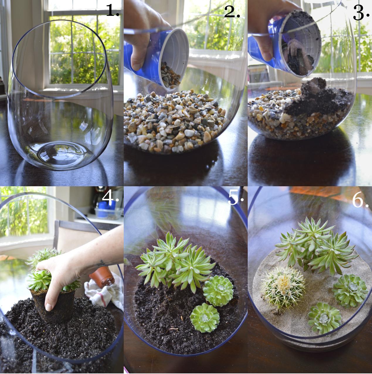 succulents terrarium making it with danielle