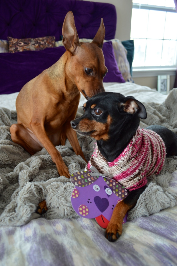Dogs with Valentine