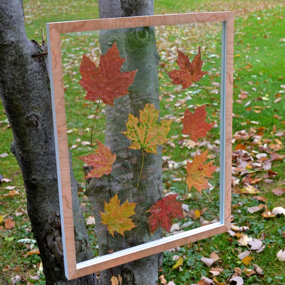 Floating Leaves in Frame